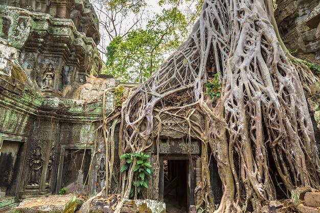 Храм та пром в ангкор-ват, камбоджа