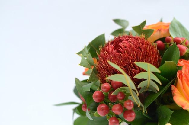 Красный цветок банкия на белом фоне