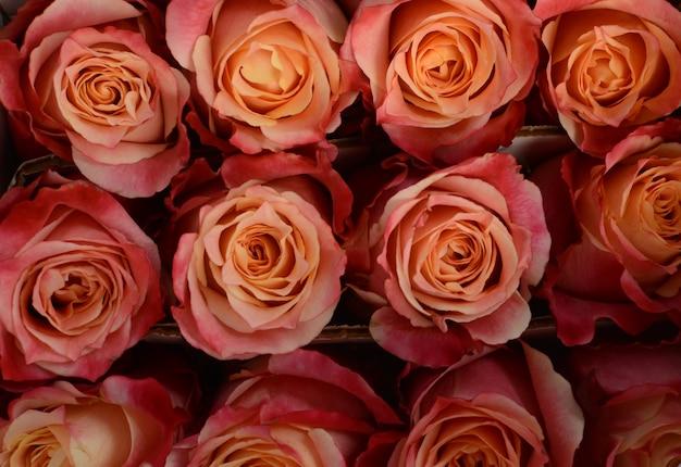 白地にピンクのバラのポンポネラ夏スプレー