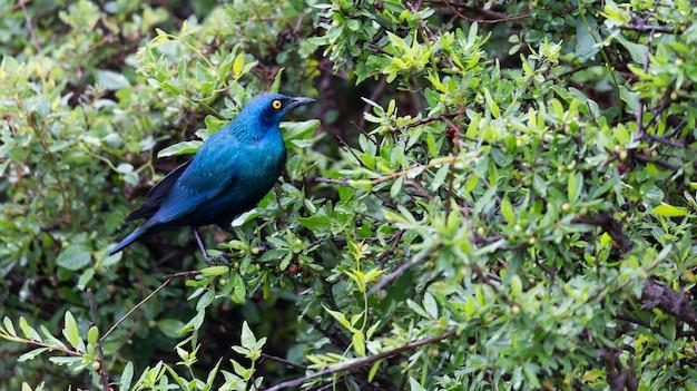 Местные кенийские птицы в ярких красках сидят на ветвях дерева