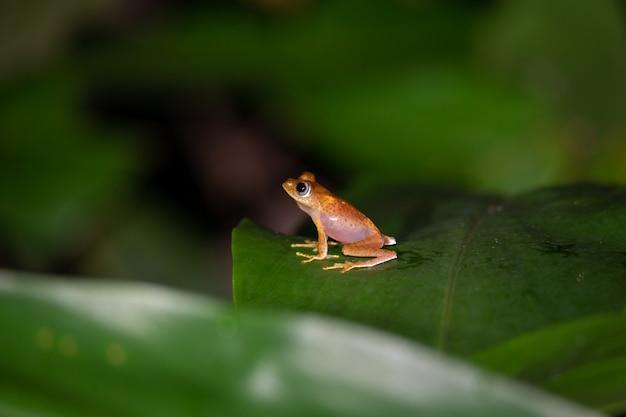 Закройте вверх на маленькой лягушке сидя на лист