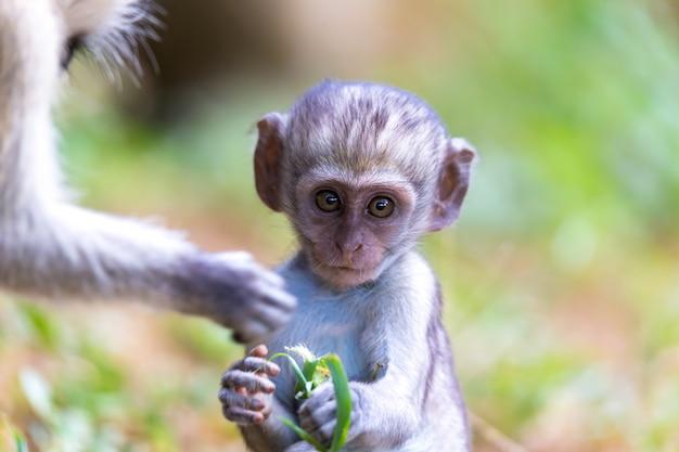 Маленькая обезьянка сидит и выглядит очень любопытно