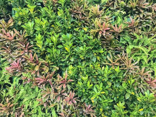 自然の緑の葉の植物フェンス壁