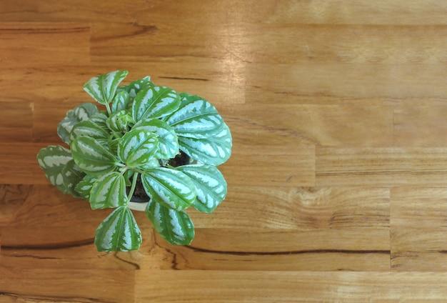 木製のテーブルに飾る小さな緑の葉の植木鉢。