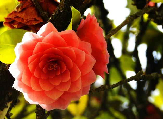 幾何学的な花びらの花
