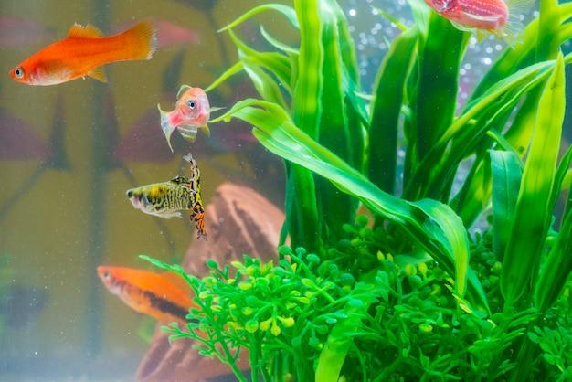 水槽や水槽の緑の植物と小さな赤い魚