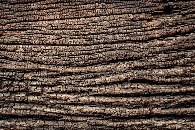 木の樹皮のテクスチャ背景。ナチュラル。