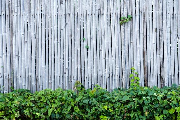 Бамбуковая предпосылка и текстура стены загородки с украшением зеленого растения.