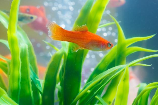 水槽や水槽の小さな魚