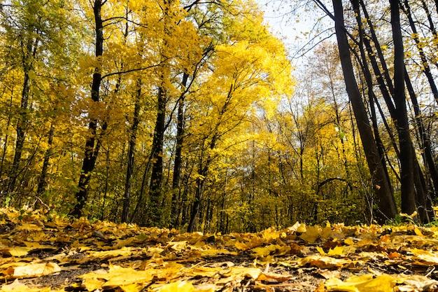 金色の葉を照らす暖かい光の光線のある秋の森の風景