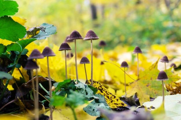 落ち葉でキノコの森のある秋の風景。自然の背景