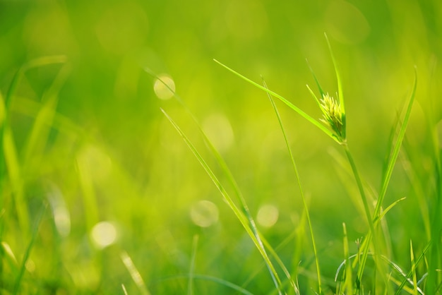 Зеленый газон с солнечным светом в утренний день