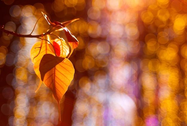 イルミネーションの葉と輝くボケ