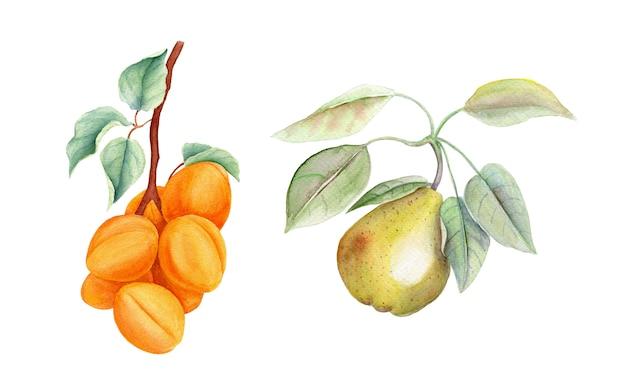 果物ヴィンテージ水彩画ボタニカルイラストのセット