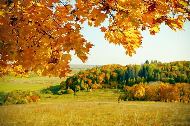 秋の森の黄色のカエデの葉