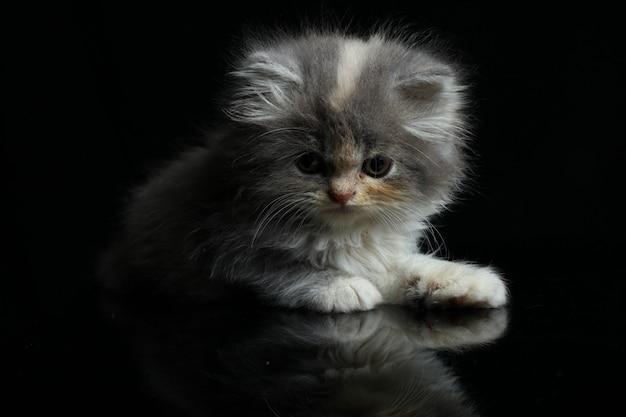 Котенок, изолированный на черном фоне