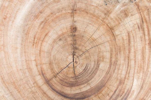 木の幹のカットのクローズアップ