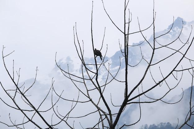 乾いた木と雪の山