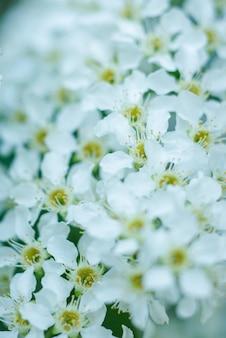 多くの小さな白い木の花