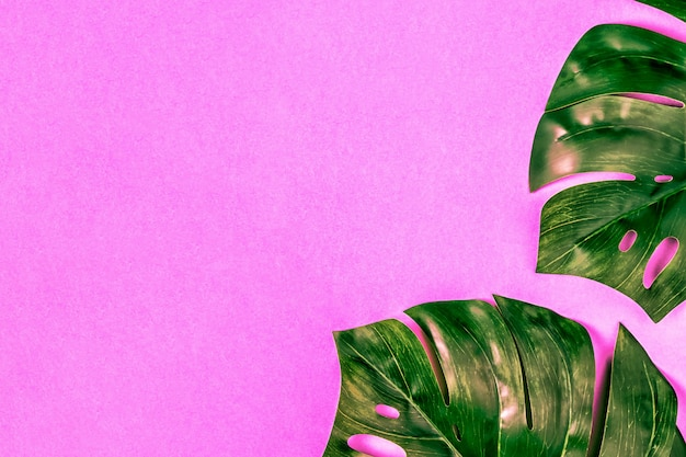 モンスターの葉、パステル調の熱帯背景