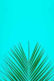 パステル調の背景に熱帯の葉