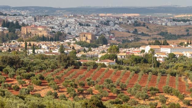 Земля засаженная оливками недалеко от города ронда