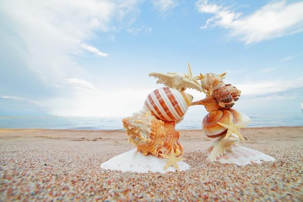 Морские раковины и звезды на берегу.