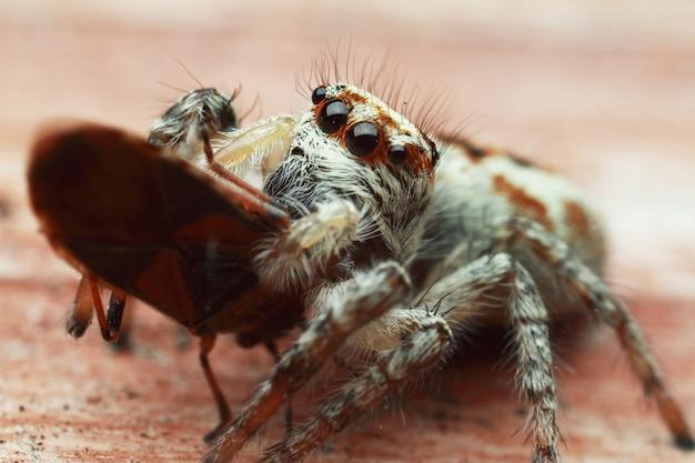 美しい目のクローズアップとクモ。昆虫のマクロ撮影。