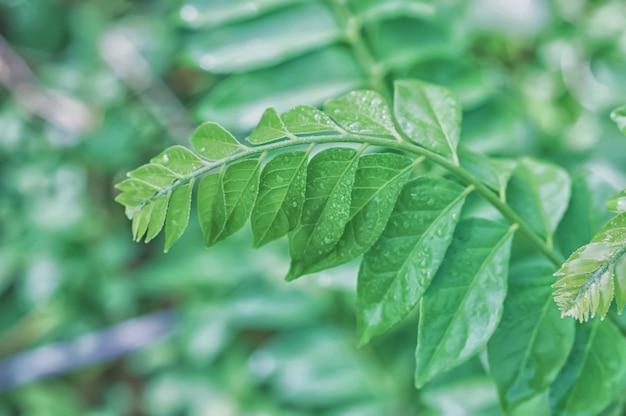 Зеленые листья с каплями росы