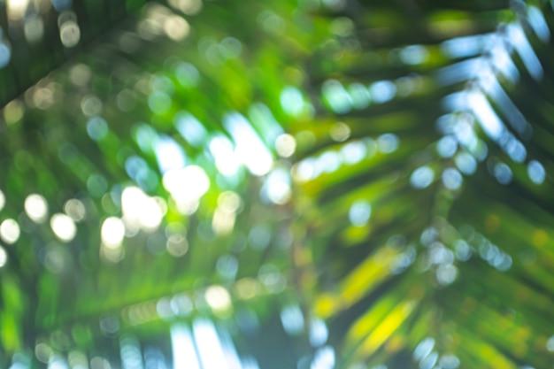 Природа фон с размытыми пальмовых листьев