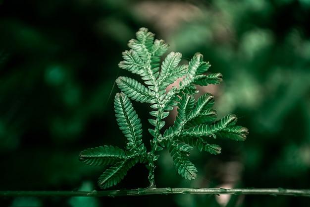 緑の葉のボケ味の光の抽象的な性質の壁紙の背景