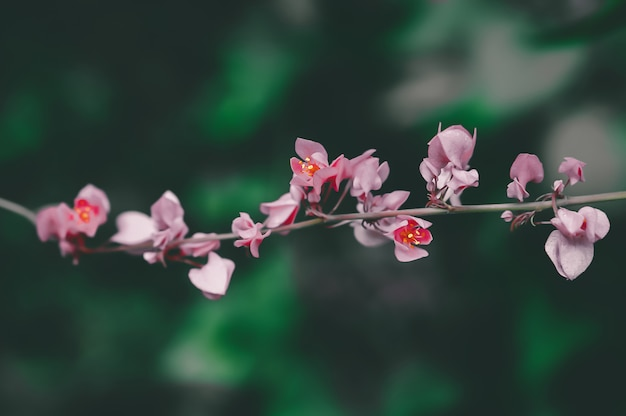 Розовый цветок расцветает, весенняя природа обои фон