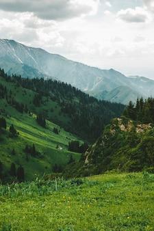 山の森の小さな小屋