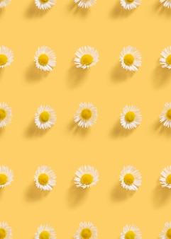 黄色の背景に新鮮な白いヒナギク