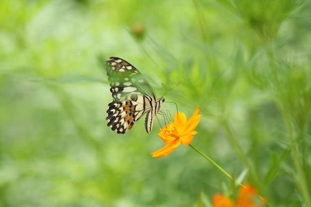 オレンジ色の花の美しい蝶
