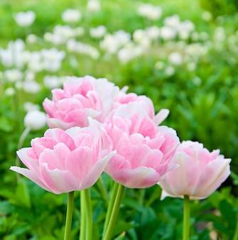Красивые розовые цветы в поле