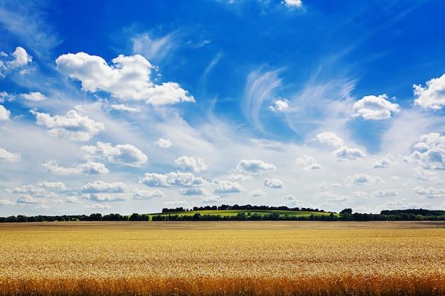 青い空を背景に夏の畑。美しい風景。
