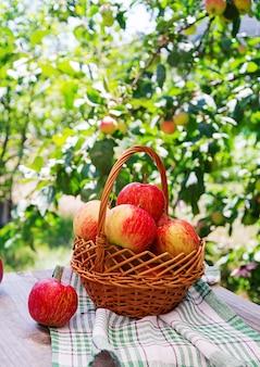 Корзина спелых красных яблок на столе в летнем саду