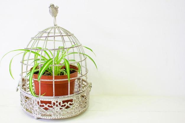 青い木製のテーブルの上に立って茶色鍋で装飾的な緑の観葉植物