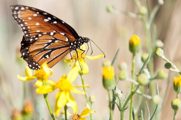 黄色の花の蝶をクローズアップ