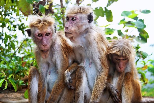自然の中で猿の家族にクローズアップ