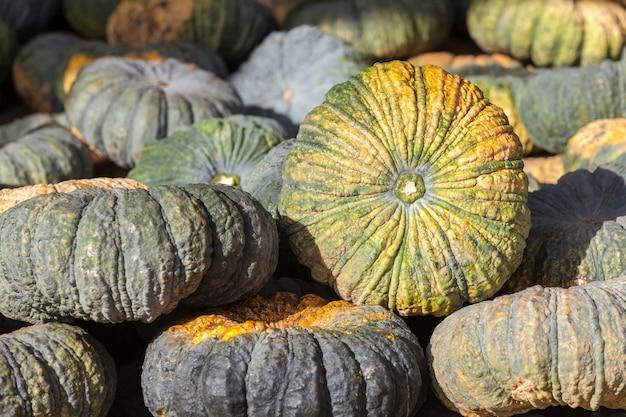 市場で収穫農業の緑のカボチャ野菜。農業や農場の背景。