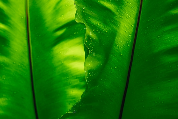 雨滴、空スペースの背景を持つ緑の葉のテクスチャー。