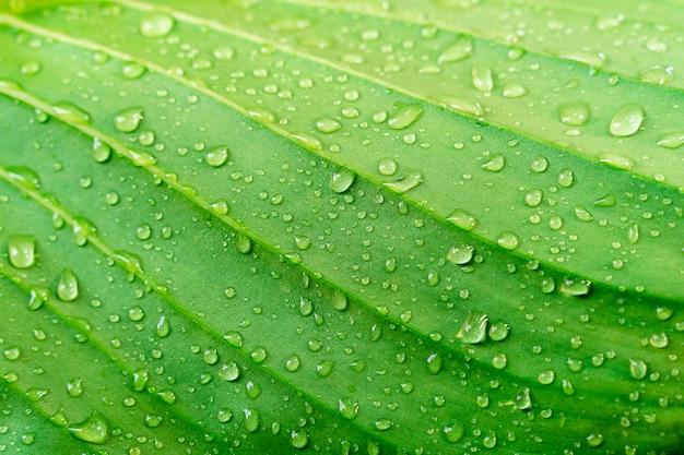 雨滴とクローズアップグリーンリーフテクスチャ。新鮮な自然の背景。