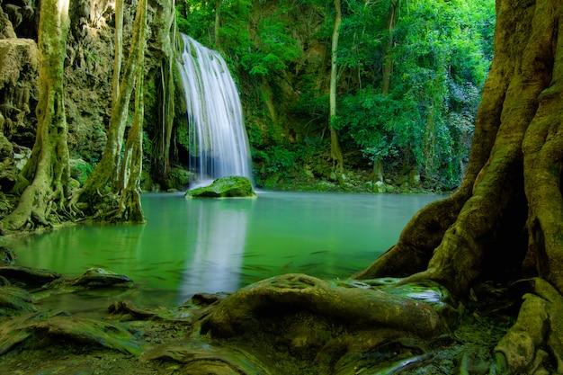 緑の森に落ちる水