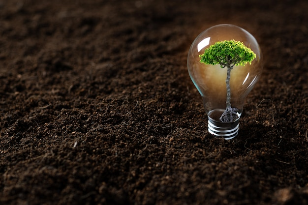 Посадить дерево, саженец растет в лампочке
