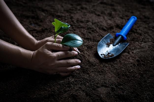 Молодые руки держать саженец и посадить небольшое дерево на почве.