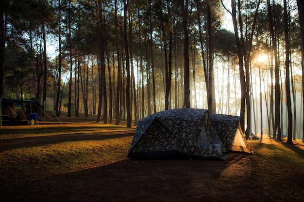 明るい日差しに照らして朝に松林の下でテント。