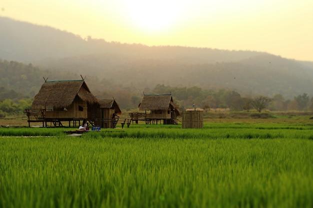 夕暮れ時の小屋でリラックスした田んぼの風景画像。