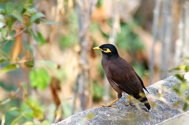 セメントの壁、庭の背景に何かを見て茶色の鳥